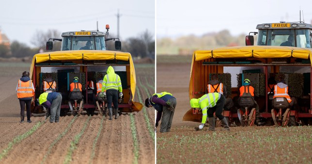 26,000 sign up to pick homegrown produce before it spoils - but they still need another 50,000