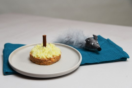 The cat cake (Picture: Battersea)