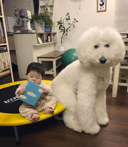 Baby reading next to giant poodle