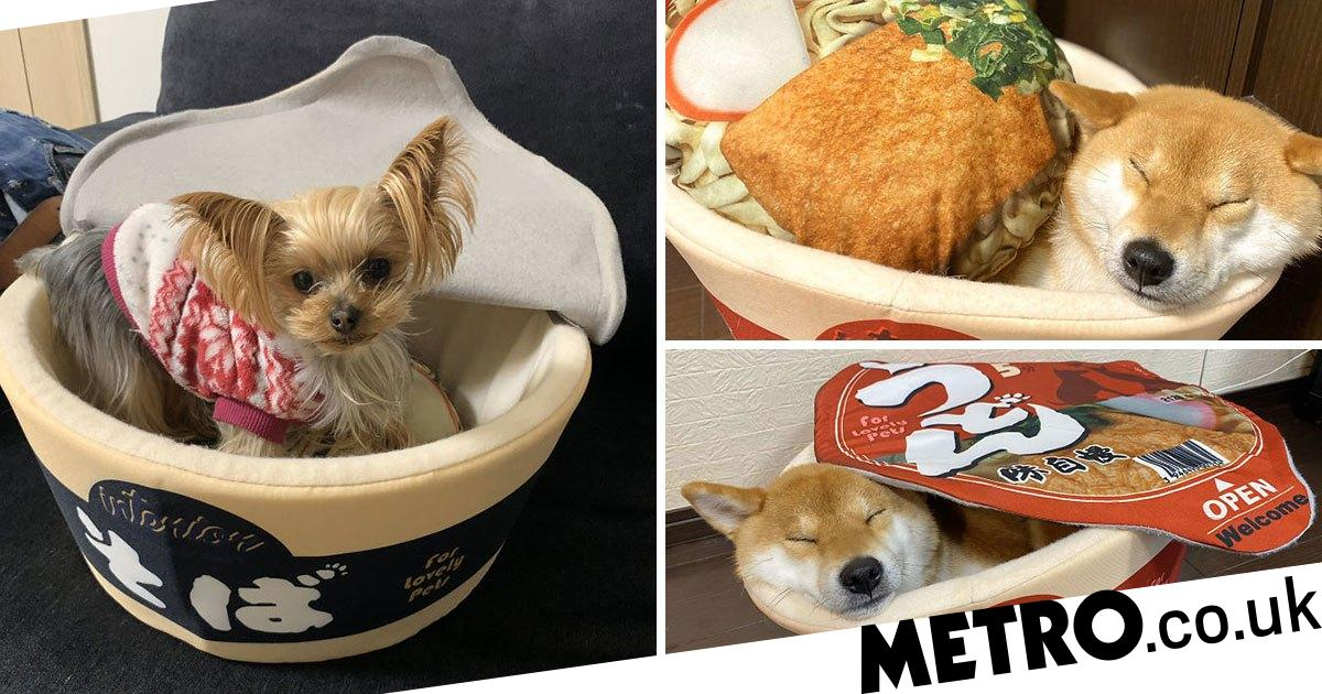 People are buying their pets cosy cup noodle beds to snooze in and it's the best