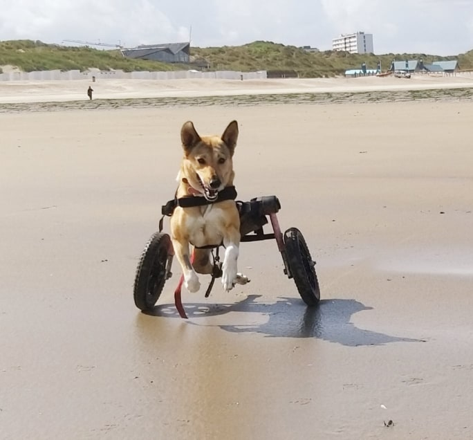 Ella with her wheelchair on the beach