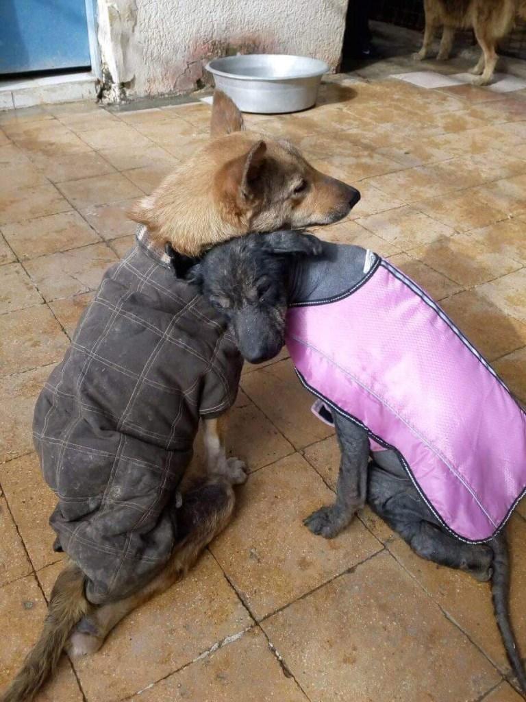 Ella the dog cuddling her friend