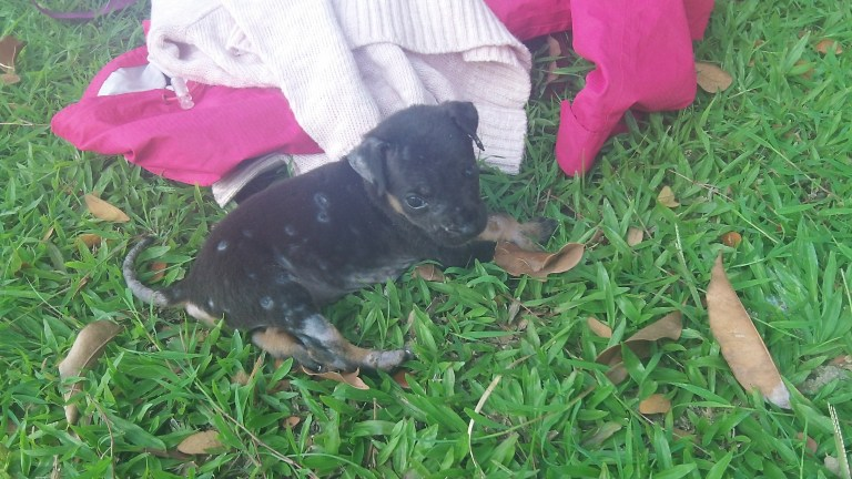 Miracle the puppy lying in the grass