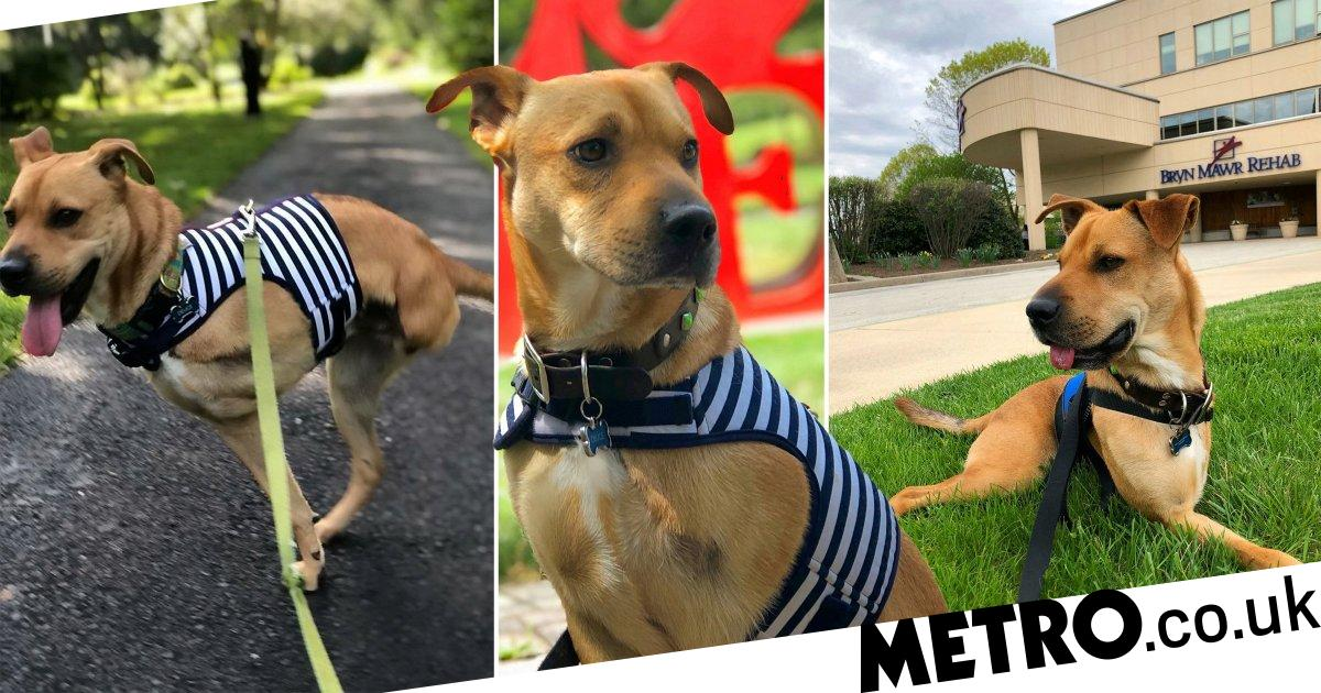 Dog defies the odds by living his best life on two legs