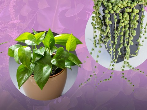 Eight houseplants to add to your home to boost your wellbeing (and how to care for them)