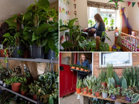 Plant shop owner stores 12,000 plants at home during lockdown to keep business afloat