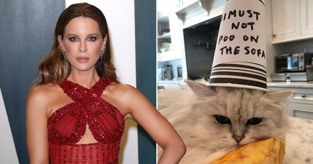 Kate Beckinsale pictured at Vanity Fair party and Instagram photo of her cat