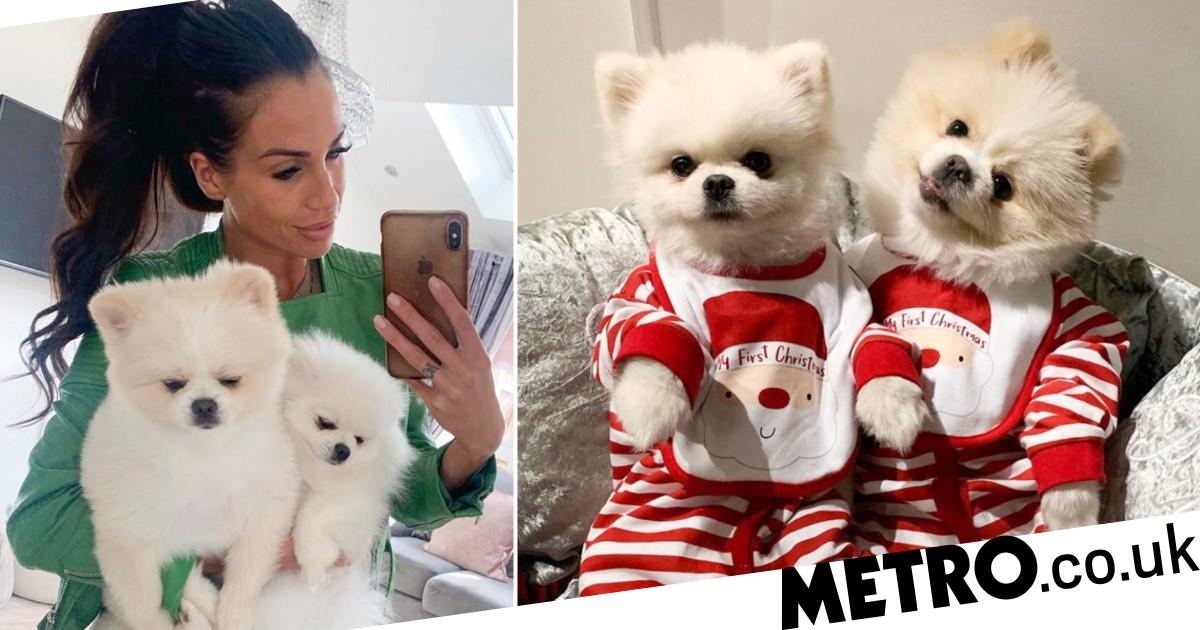 Mum spends more money on her pampered pomeranians than she does on her son