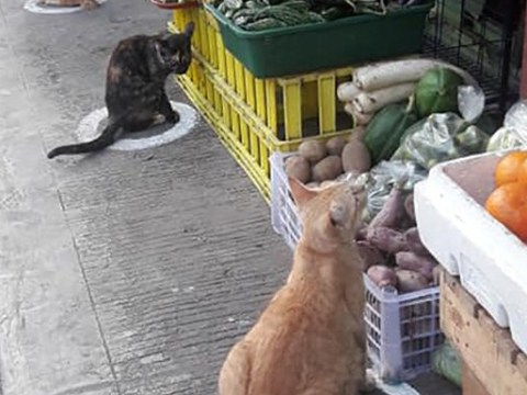 Let's all follow the example of these cats expertly social distancing while visiting a market