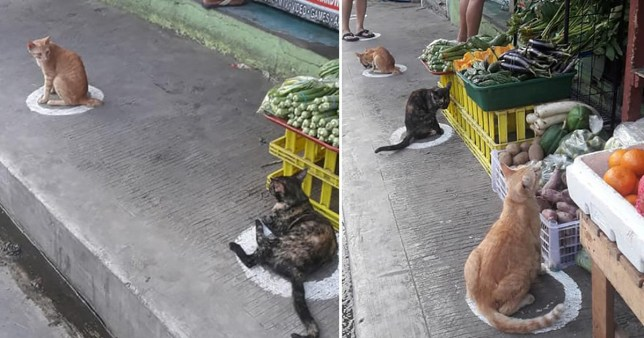 cats queuing outside a market in the Philippines and observing social distancing measures