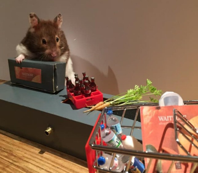 Beverly Borrills hamsters Lulu and Max recreating a shopping scene during lockdown
