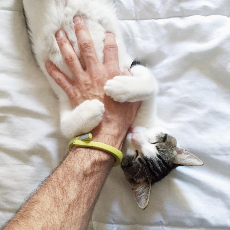 a cat getting its belly tickled