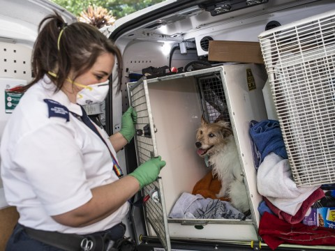 People are dumping pets over fears they spread coronavirus
