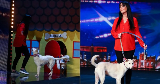 Everyone is basically in tears after a magic dog act and you will be too