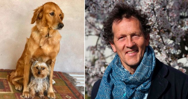 Monty Don's cosy life with his dogs as beloved pet Nigel dies