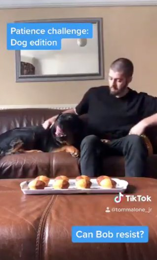 Gogglebox star sets dog Tik Tok challenge and we love it (Picture: @TomMaloneJr/Twitter)