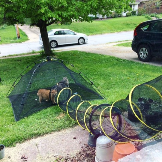 A quarantined couple have made a DIY chute leading from their house to a tent in their front garden - so their cats can play outside