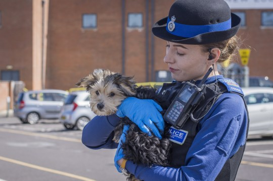 A PCSO with the dog which was left in a vehicle in Swindon. See SWNS story SWBRdog A man who smashed the window of a stranger's car right in front of police has been told his actions were lawful - after spotting a puppy trapped inside. The unnamed rescuer told officers he would break into the vehicle if they didn't act after noticing the 'distressed' animal. So when he returned to an unchanged scene in the centre of Swindon, Wilts., he decided to take charge - shattering the glass and scooping the dog out. PSCOs later decided that the man would not face punishment after calming down the car's owner - deeming his actions lawful.