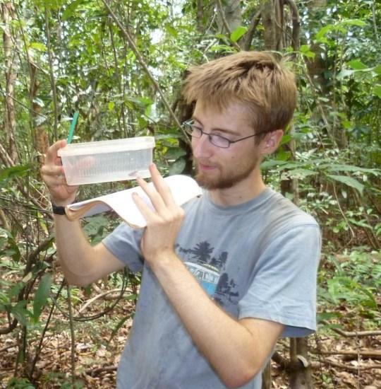 Novas espécies de sapos são descobertas e já estão ameaçadas