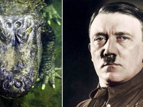 'Hitler's alligator' dies aged 84