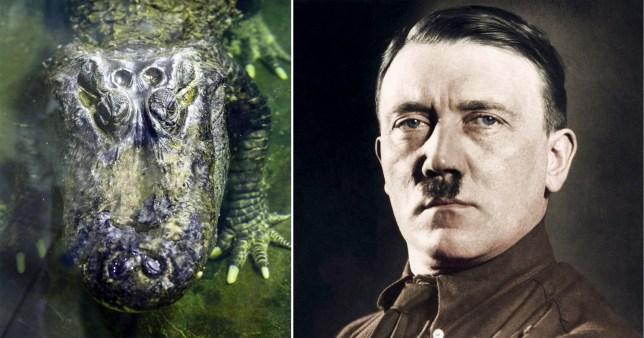 Hitler's alligator dies