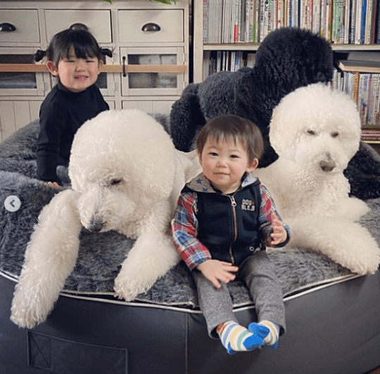 Kids with giant poodles
