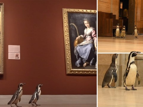 Penguins take trip to art museum which is closed during lockdown