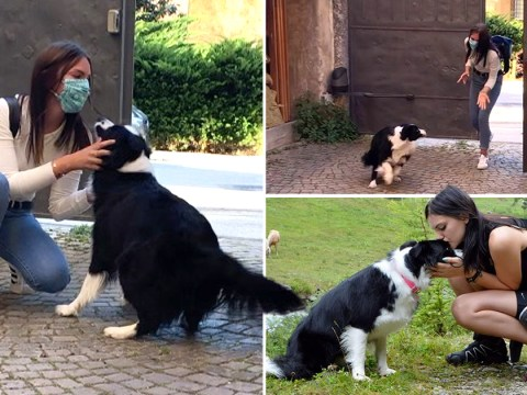 Video captures emotional moment dog is reunited with woman after 56 days apart in quarantine