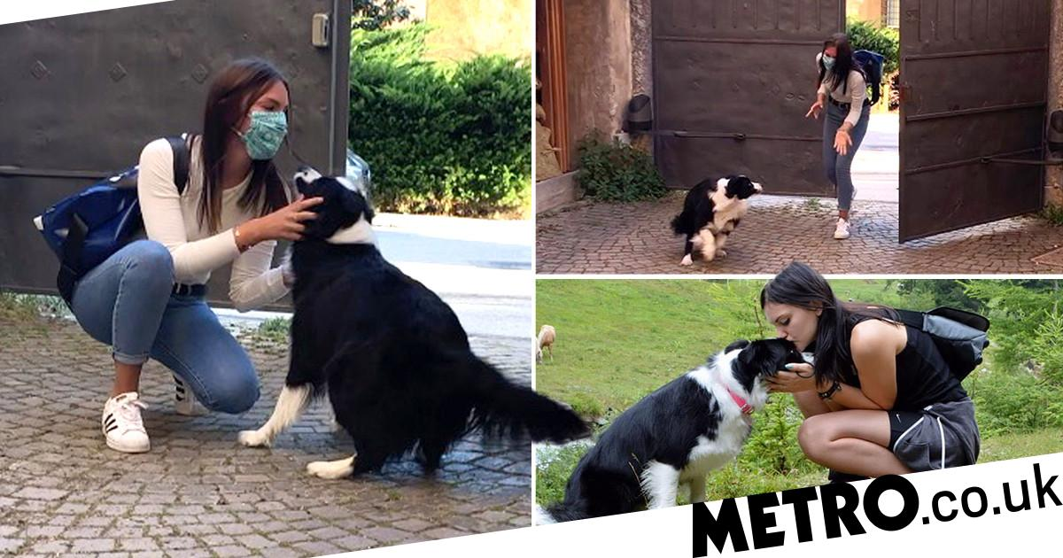 Dog is reunited with woman after 56 days apart in quarantine