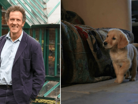 Gardeners' World's Monty Don shares throwback of beloved Nigel as an adorable puppy, following sad death