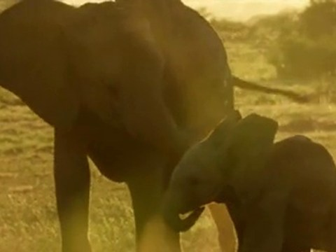 Sky's Wild Animal Babies: Watch heart-rendering moment elephant calf discovers his trunk