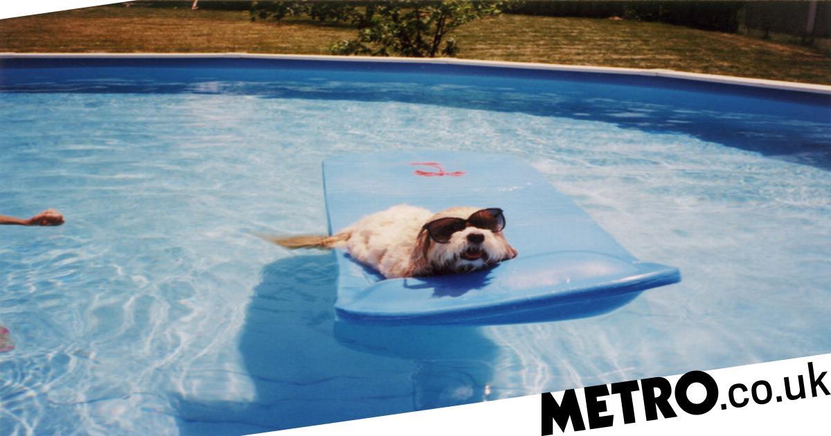 Signs your dog has heatstroke