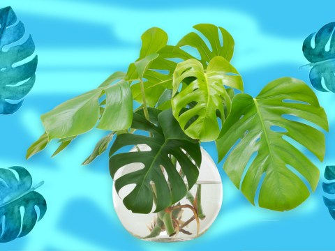 The top houseplants people love to share on Instagram – and how to look after them