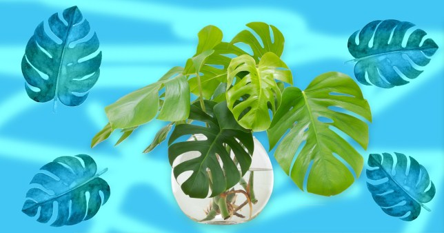 top houseplants and how to care for them