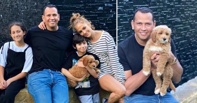 Jennifer Lopez and her family's new dog