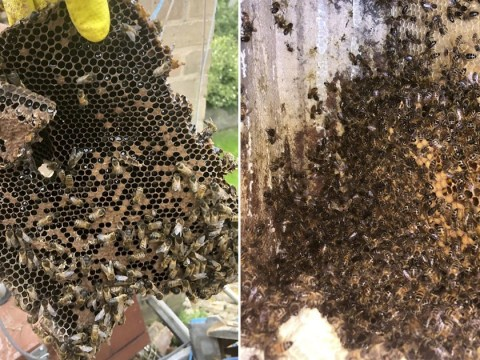 Beekeeper's heartbreak after 130,000 bees are stolen from farm