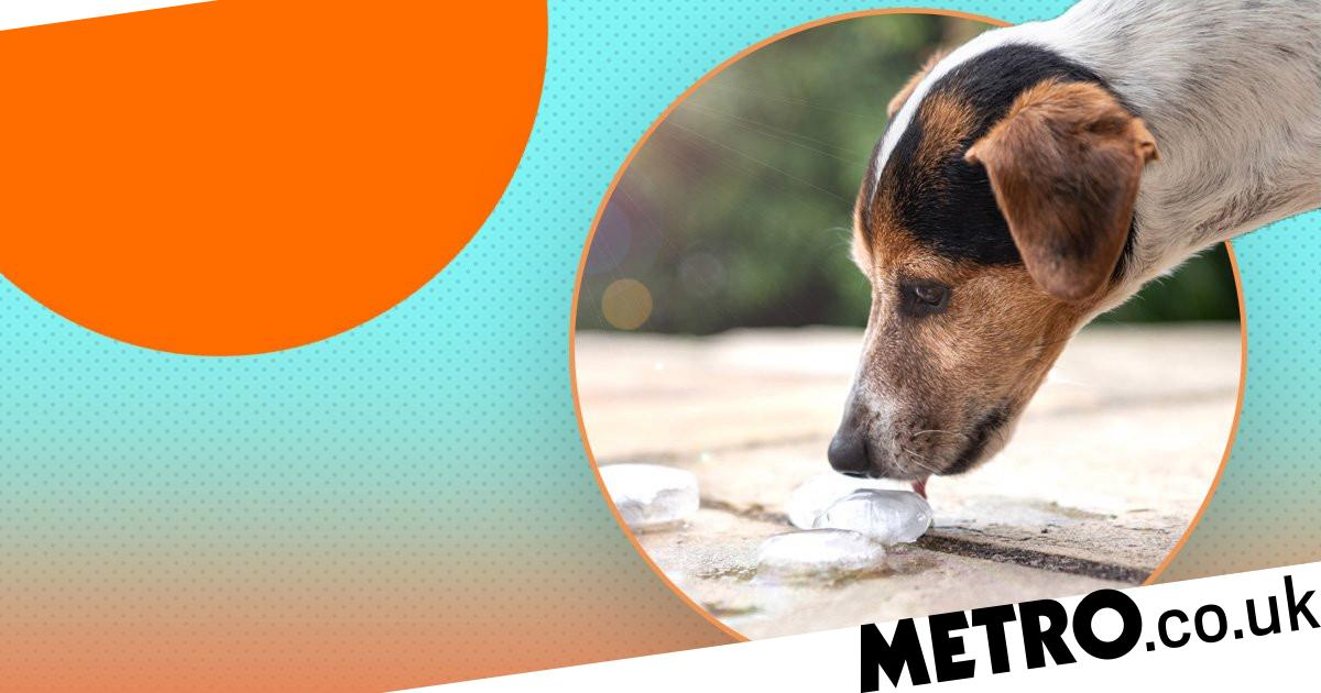 Blue Cross reveals how to safely give a dog ice cubes in a heatwave