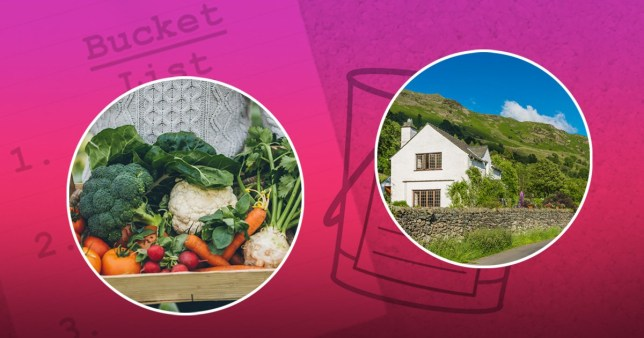 vegetables and a country home on a colourful background