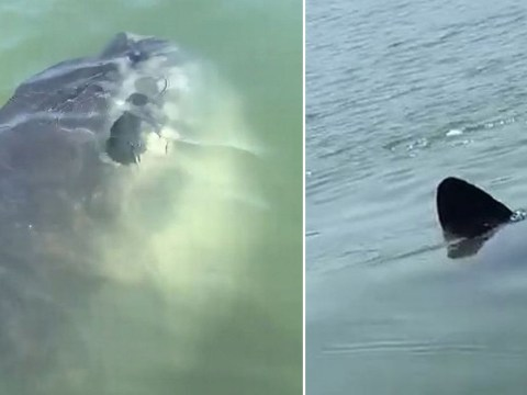 Moment 6ft sunfish swims right up to family's boat off Welsh coast