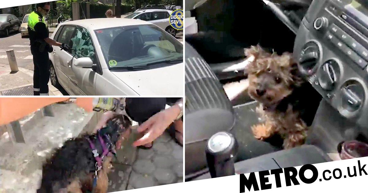 Police forced to smash window to save dog trapped in car in 40C heat