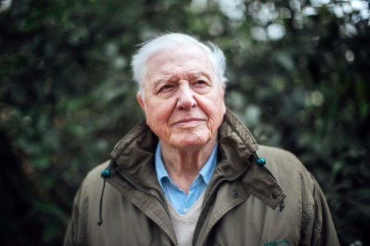 WARNING: Embargoed for publication until 00:00:01 on 22/03/2019 - Television Programme: Climate Change with David Attenborough (tbc) - TX: n/a - Episode: Climate Change with David Attenborough (tbc) - announcement (No. n/a) - Picture Shows: ***STRICTLY EMBARGOED UNTIL 00:00:01 FRIDAY 22nd MARCH 2019*** Sir David Attenborough - (C) BBC - Photographer: Polly Alderton
