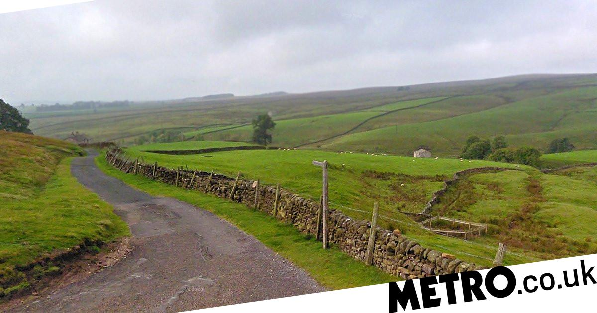 Man, 82, killed after being attacked by herd of cows - metro