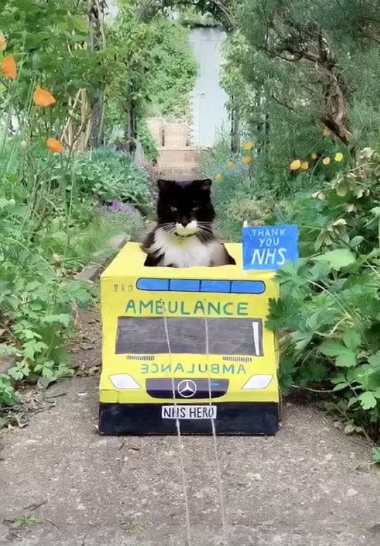 Toltex the cat in his NHS ambulance that owner Jen made out of cardboard