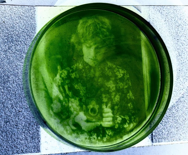 Russell Marx picture printed onto algae. See SWNS copy SWCAalgae: Graduate student Russell Marx is taking experimental photography to a whole new level. Marx, who is currently working on their PhD in neuroscience, has developed an unusual technique where they actually print their pictures onto algae. The results are a striking mix of art and science that demonstrate what a little ingenuity can do.
