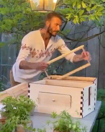 David Beckham building beehives