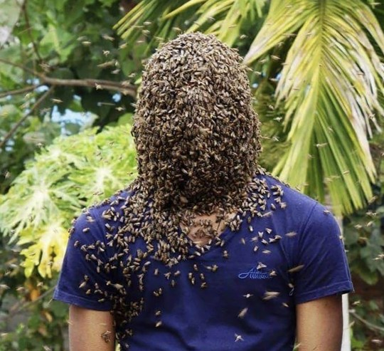 Man with bees all over his face
