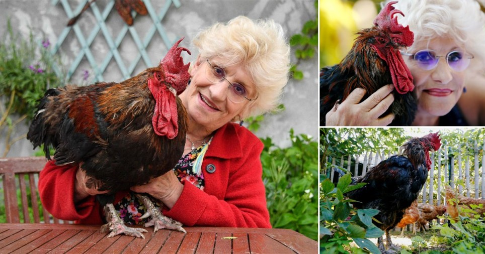 Maurice the noisy rooster dies Reuters/Getty