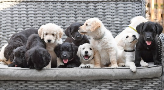 the 12 puppies