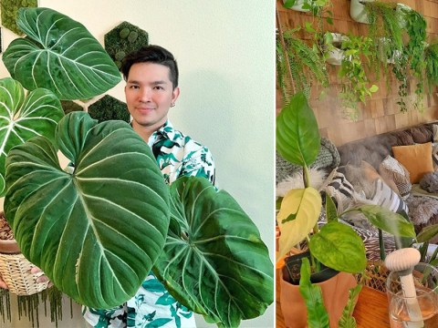 'Plant daddy' spends £4,000 on turning house into an oasis with over 200 species of houseplant