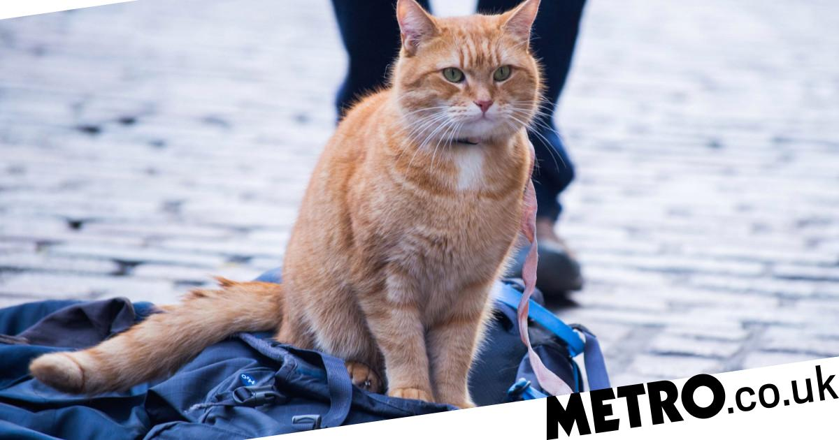 Street Cat Bob Dies What S The Story Behind The Film Metro News
